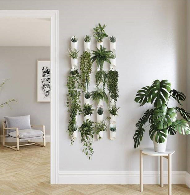 plants on feature wall in living room