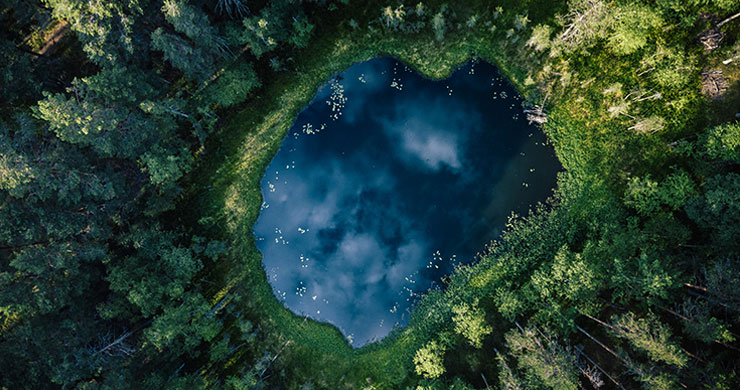 aerial view of forest and pond wallpaper