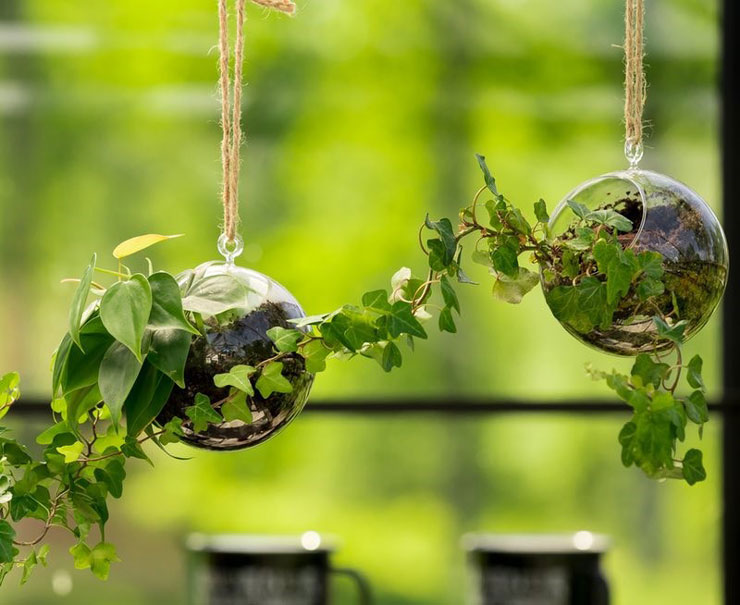 glass balls hanging from string containing green plants