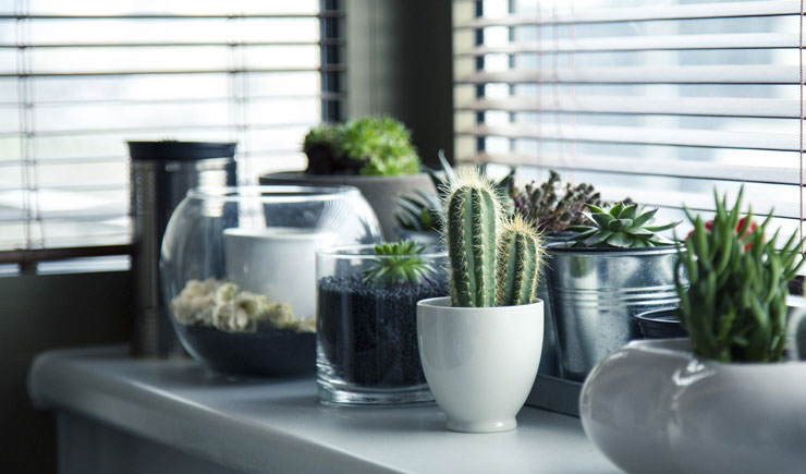 green potted plants on window ledge