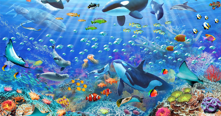 colourful sea life ocean wallpaper