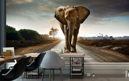 Elephant Wallpaper Wallpaper Murals