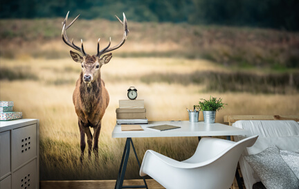 Stag Wallpaper & Deer Wallpaper Wallpaper Murals