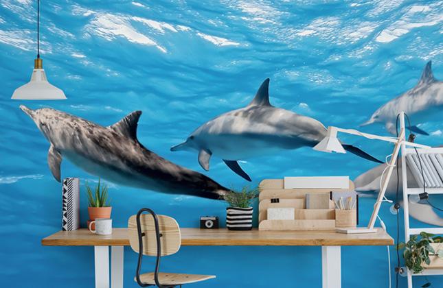 Dolphin Wallpaper Wall Murals Wallsauce Eu