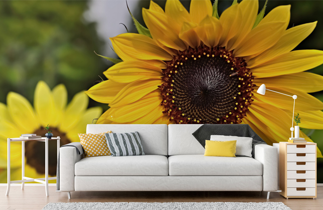 Sunflower Wallpaper Wallpaper Murals