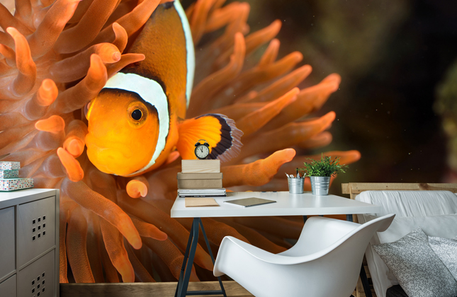 Tropical Fish Wallpaper Wallpaper Murals