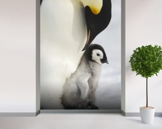 Adult Emperor Penguin and Chick mural wallpaper