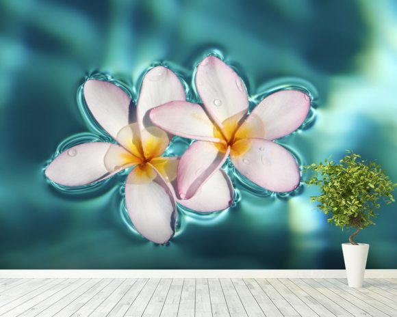 Two Plumeria Blossoms Floating On Water wallpaper mural room setting