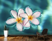 Two Plumeria Blossoms Floating On Water wallpaper mural kitchen preview