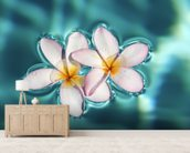 Two Plumeria Blossoms Floating On Water wallpaper mural living room preview