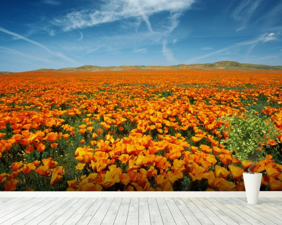 California lancaster vibrant field of california poppies for California mural