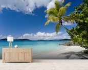 U.S. Virgin Islands, St. John, Palm Tree Beautiful Beach wallpaper mural living room preview