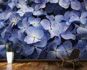 Hawaii, Maui, Hydrangea Flowers wall mural kitchen preview