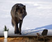 Black Wolf Walking In Snow wallpaper mural kitchen preview