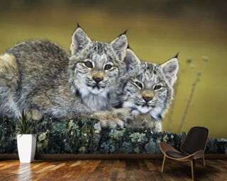 Lynx Kittens Cuddled Together On Rock mural wallpaper