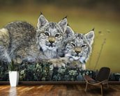 Lynx Kittens Cuddled Together On Rock mural wallpaper kitchen preview