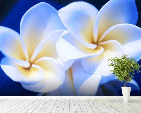 Detail Of White Plumeria Flowers wall mural room setting