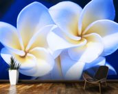 Detail Of White Plumeria Flowers wall mural kitchen preview