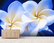 Detail Of White Plumeria Flowers wall mural living room preview