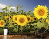 Hawaii, Oahu, North Shore, Sunflower Field wallpaper mural kitchen preview