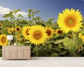Hawaii, Oahu, North Shore, Sunflower Field wallpaper mural living room preview