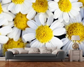Daisy wallpaper wall murals wallsauce usa for Daisy fuentes wall mural