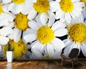 Summer Daisies - Cluster Of White Blossoms mural wallpaper kitchen preview