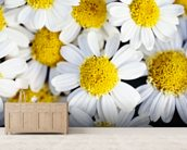 Summer Daisies - Cluster Of White Blossoms mural wallpaper living room preview