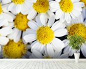 Summer Daisies - Cluster Of White Blossoms mural wallpaper in-room view