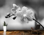 Close-Up Of Spotted Orchids With Dewdrops wall mural kitchen preview