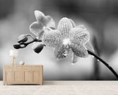 Close-Up Of Spotted Orchids With Dewdrops wall mural living room preview