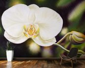White Phalaenopsis Orchid Blossom wall mural kitchen preview