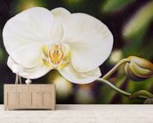 White Phalaenopsis Orchid Blossom wall mural living room preview