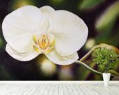 White Phalaenopsis Orchid Blossom wall mural in-room view