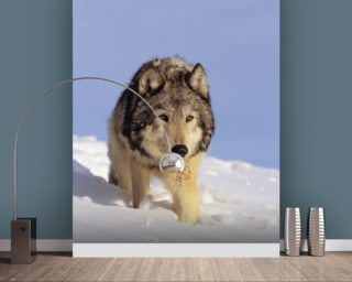 Gray Wolf Stalking Prey In Deep Winter Snow wallpaper mural