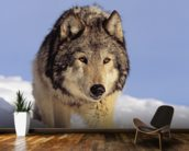 Gray Wolf Stalking Prey In Deep Winter Snow wallpaper mural kitchen preview