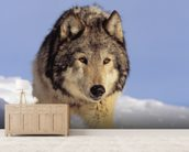 Gray Wolf Stalking Prey In Deep Winter Snow wallpaper mural living room preview