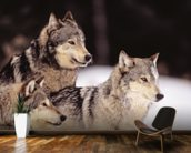 Three Gray Wolves At The Forests Edge mural wallpaper kitchen preview