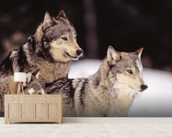 Three Gray Wolves At The Forests Edge mural wallpaper living room preview