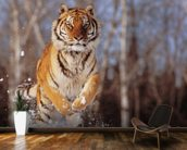 Siberian Tiger Charging Through Winter Snow wall mural kitchen preview