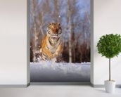 Siberian Tiger Charging Through Winter Snow wall mural in-room view
