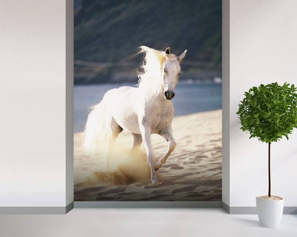 White Horse Running On The Beach mural wallpaper room setting