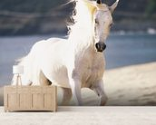 White Horse Running On The Beach mural wallpaper living room preview