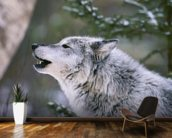 Gray Wolf Howling wallpaper mural kitchen preview