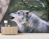 Gray Wolf Howling wallpaper mural living room preview