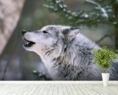 Gray Wolf Howling wallpaper mural in-room view