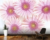 Pink Daisies mural wallpaper kitchen preview