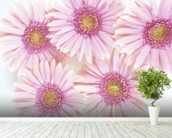 Pink Daisies mural wallpaper in-room view