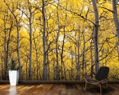 Autumn Scenic Of Colorful Yellow Aspen Trees wall mural kitchen preview
