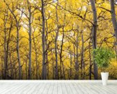 Autumn Scenic Of Colorful Yellow Aspen Trees wall mural in-room view